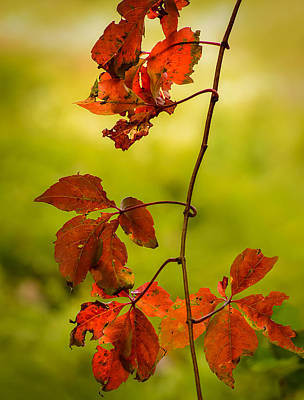 Food And Flowers Still Life - Red Leaves by Robert Mitchell