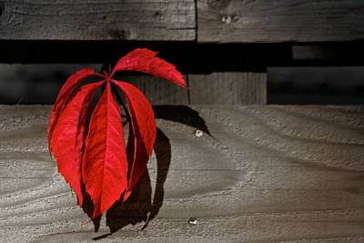 Photograph - Red Leaves by Scott Holmes