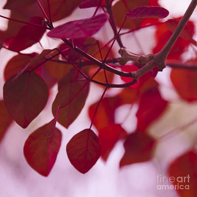 With Red Photograph - Red Leaves by Sharon Mau