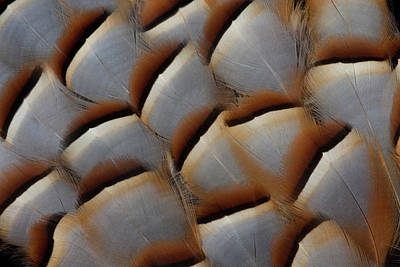 Silver-colored Photograph - Red-legged Partridge Flank Feathers by Darrell Gulin