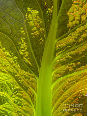 Red Lettuce Veins Art Print