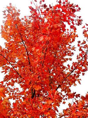 Photograph - Red Lights by Deborah  Crew-Johnson