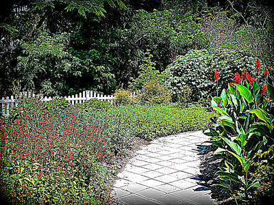 Photograph - Red Liliy Garden Path by Sheri McLeroy