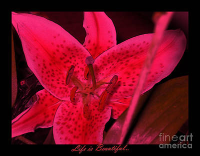 Photograph - Red Lily by Oksana Semenchenko