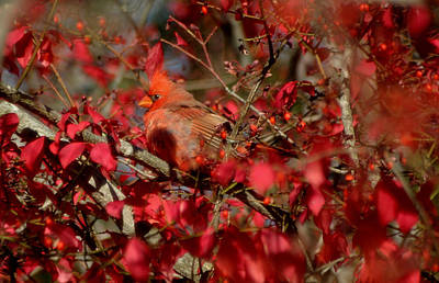 Photograph - Red by Living Color Photography Lorraine Lynch
