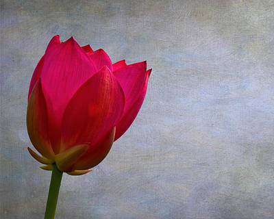 Photograph - Red Lotus by Wes and Dotty Weber