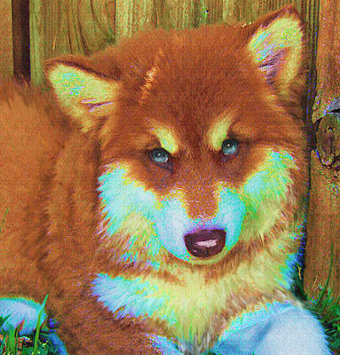 Digital Art - Red Malamute by Jane Schnetlage