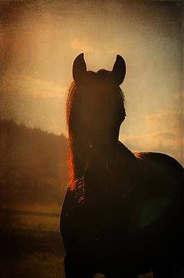 Photograph - Red Mane by Emily Stauring