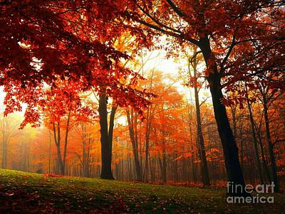 Photograph - Red Maple Forest by Terri Gostola