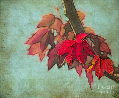Photograph - Red Maple by Judi Bagwell