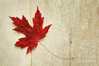 Red Maple Leaf Art Print by Isabel Poulin