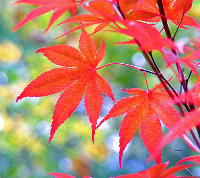 Photograph - Red Maple Leaves by Duane McCullough