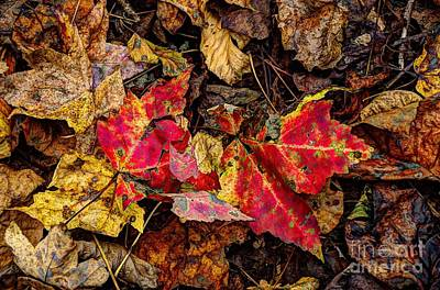 Photograph - Red Maple Leaves by Paul Mashburn
