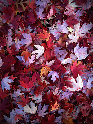 Photograph - Red Maple Leaves by Tim Nyberg
