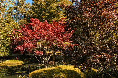 Photograph - Red Maple by Penny Lisowski