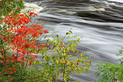 Northwoods Photograph - Red Maple Tree And Cascade by Adam Jones