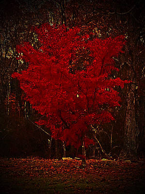 Photograph - Red Maple Tree Too by Lisa Cortez