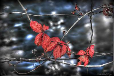 Photograph - Red by Michaela Preston