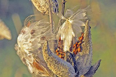 Red Milkweed Beetles Art Print by Constantine Gregory