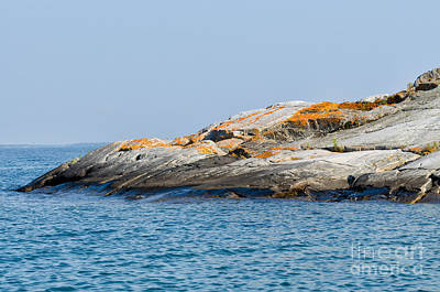 Photograph - Red Moss On Rocky Coastline by Les Palenik