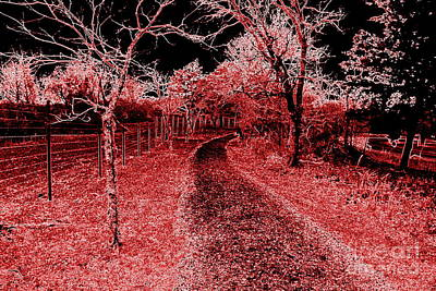 Photograph - Red Night Trail by Mickey Harkins
