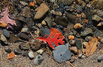Red Oak Leaf Art Print by Michael Saunders