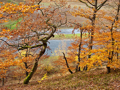 Photograph - Red Oak Trees Above The Eder River by Martin Liebermann