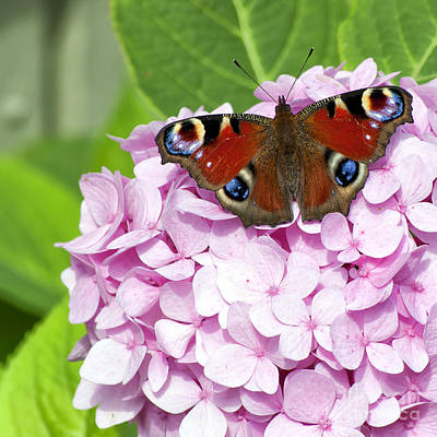 Flutter Photograph - Red On Pink On Green by Antony McAulay