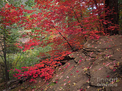 Photograph - Red On Red At West Fork Trail Sedona by Marianne Jensen