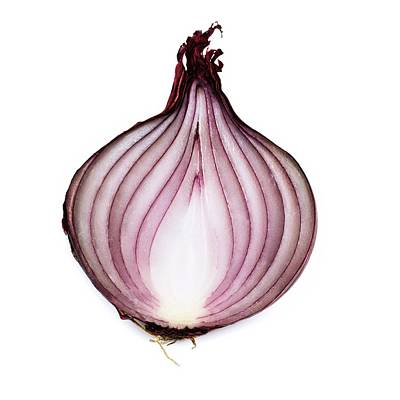 Onion Photograph - Red Onion by Science Photo Library