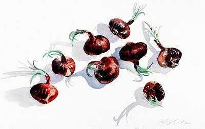 Painting - Red Onions by Mark Lunde
