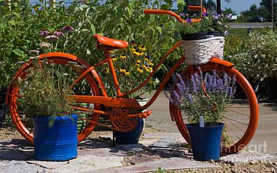 Red Orange Flower Basket Bike Art Print