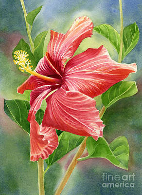 Red Orange Hibiscus With Background Art Print by Sharon Freeman