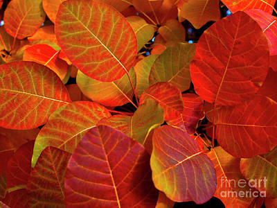 Print featuring the photograph Red Orange Leaves by Charles Lupica