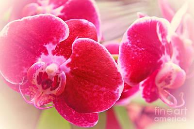 Red Orchid Original