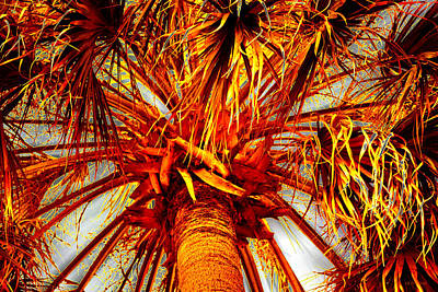 Photograph - Red Palm Crown by Roy Erickson