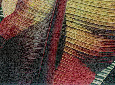 Photograph - Red Palm by Nadalyn Larsen