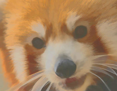 Digital Art - Red Panda Up Close by Ray Shiu