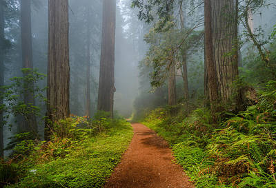 Photograph - Red Path Through Redwoods by Greg Nyquist