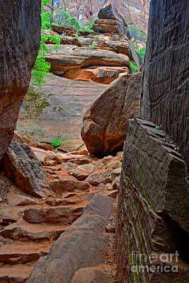 Photograph - Red Path Zion by Third Eye Perspectives Photographic Fine Art