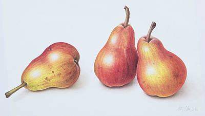 Ripe Drawing - Red Pears by Margaret Ann Eden