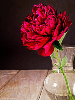 Red Peony Flower Vase Art Print by Edward Fielding