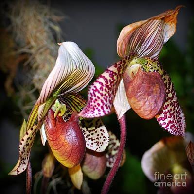 Orchids Digital Art - Red Pepper Green Jade Orchids by Nancy Mueller