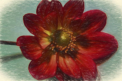 Digital Art - Red Petal Sketch by Terry Cork