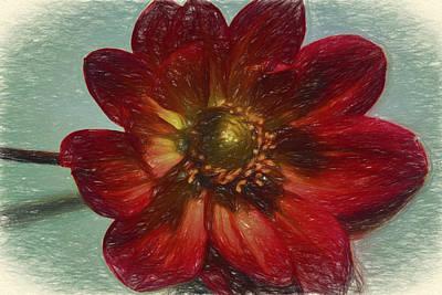 Digital Art - Red Petal Sketch by Terry Cork