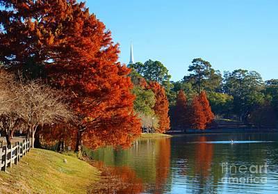 Red Pine On Lake Ella Art Print