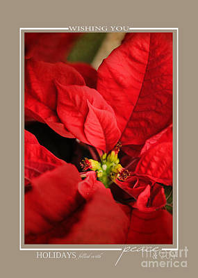 Photograph - Red Poinsettia Flower Christmas Cards by Jai Johnson