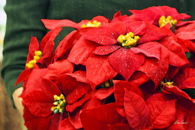 Photograph - Red Poinsettias by Diana Haronis