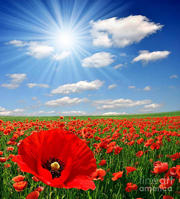 Red Poppies And Sky Print by Boon Mee