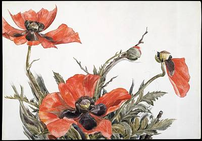 Red Poppies Art Print by Charles Demuth